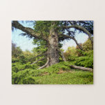 """Cedar-of-Lebanon Tree Photo Puzzle with Gift Box<br><div class=""""desc"""">Cedar-of-Lebanon tree (Cedrus lisbani) located in the village of Hautefort in the Dordogne,  France</div>"""