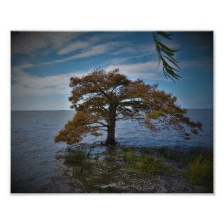 Cedar Photo Print