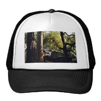 Cedar Pine And Oak Trees Yosemite Valley Hat