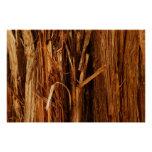 Cedar Textured Wooden Bark Look Poster