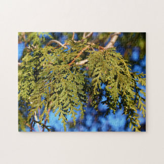 Cedar Tree Leaves Jigsaw Puzzle