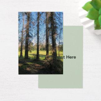 Cedar Trees Griffith Park photograph 1