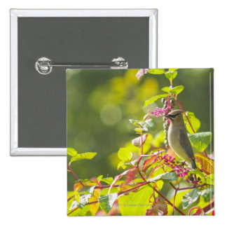 Cedar Waxwing  And Poke Berries On A Tree 2 Inch Square Button