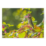 Cedar Waxwing  And Poke Berries On A Tree Greeting Card