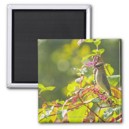 Cedar Waxwing  And Poke Berries On A Tree Magnet