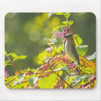 Cedar Waxwing  And Poke Berries On A Tree Mouse Pad