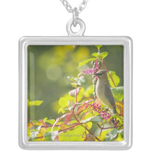 Cedar Waxwing  And Poke Berries On A Tree Personalized Necklace