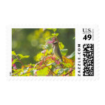Cedar Waxwing  And Poke Berries On A Tree Stamps