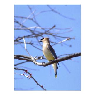 Cedar waxwing bird watching design letterhead
