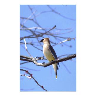 Cedar waxwing bird watching design stationery