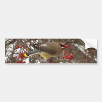 Cedar Waxwing Bumper Sticker