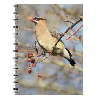 Cedar Waxwing Eating Berries Notebook