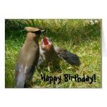 Cedar Waxwing Family Birthday Card