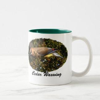 Cedar Waxwing II, Cedar Waxwing, Cedar Waxwing Two-Tone Coffee Mug