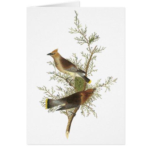 Cedar Waxwing, John Audubon Cards