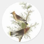 Cedar Waxwing, John Audubon Sticker