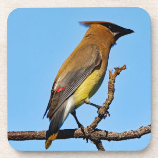 Cedar Waxwing on a Limb Coaster