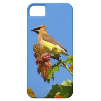 Cedar Waxwing on blue sky iPhone SE/5/5s Case