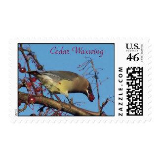 Cedar Waxwing Postage Stamps