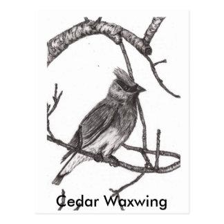 , Cedar Waxwing Postcard