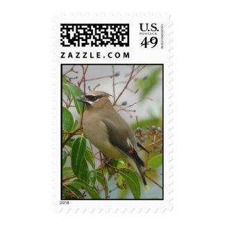 Cedar Waxwing Stamp