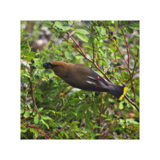 Cedar Waxwing with Huckleberry Canvas Print
