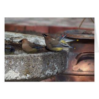 Cedar Waxwings And Birdbath Card
