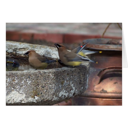 Cedar Waxwings And Birdbath Card
