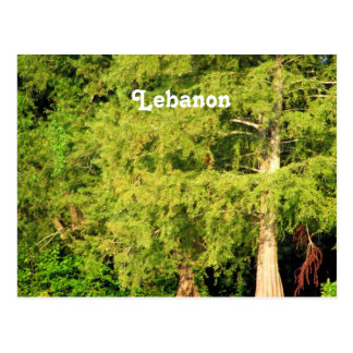 Cedars of Lebanon Postcard