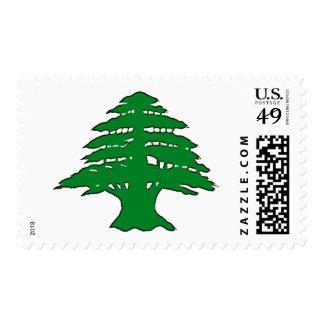 Cedro libanés sellos