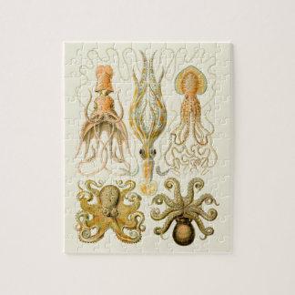 Cefalópodos del vintage rompecabeza con fotos