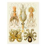Cefalópodos del vintage tarjeta postal