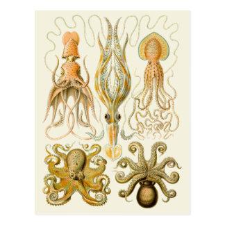 Cefalópodos del vintage postal