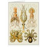 Cefalópodos del vintage tarjetas