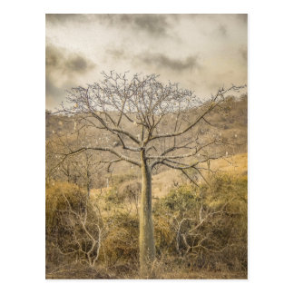 Ceiba Tree at Forest Guayas Ecuador Postcard