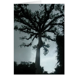 Ceiba Tree w Quote Card