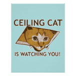 Ceiling Cat Poster