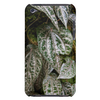 Celebes Pepper Case-Mate iPod Touch Barely There iPod Touch Case-Mate Case