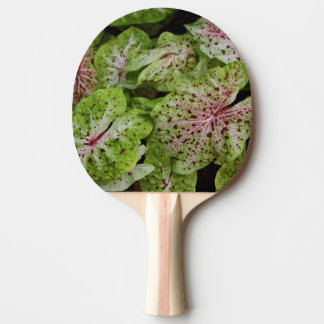 Celebes Pepper Ping Pong Paddle