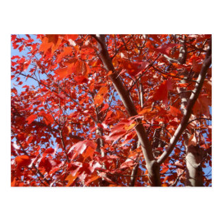 Celebrate Autumn Postcard