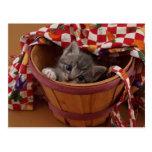 Celemín de gatito postales