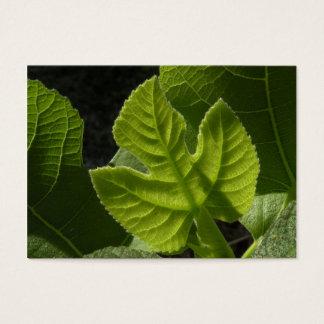 Celeste Baby Fig Leaf ATC Photo Card