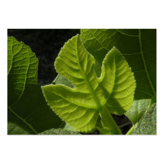 Celeste Baby Fig Leaf ATC Photo Card Large Business Card