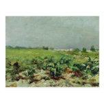Celeyran, vista del viñedo, 1880 tarjetas postales