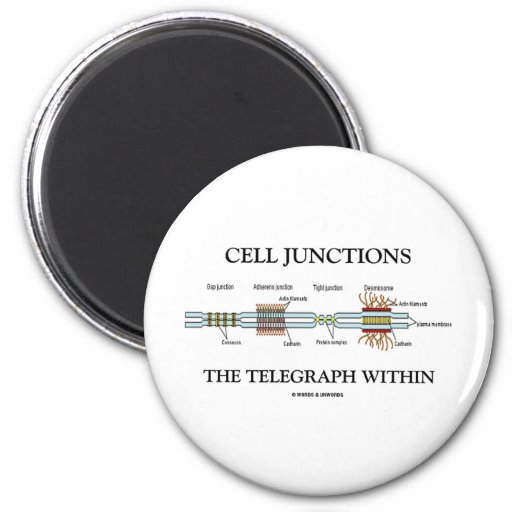 Cell Junctions The Telegraph Within Magnets