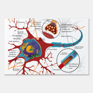 Cell Neurons Healthy Sign