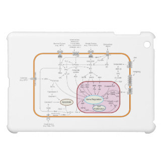 Cell Signal Transduction Pathways Diagram Cover For The iPad Mini