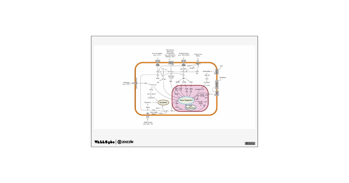 Cell Signal Transduction Pathways Diagram Wall Sticker