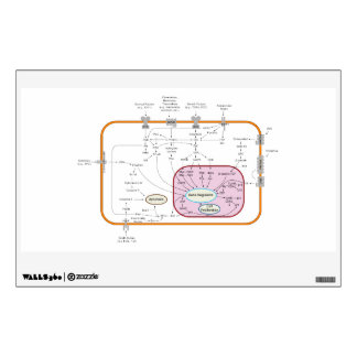 Cell Signal Transduction Pathways Diagram Wall Graphic