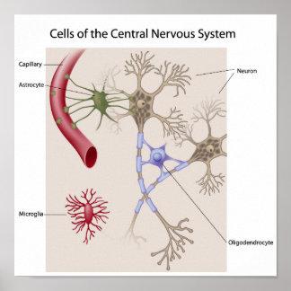 Cells of Central nervous system Poster